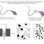 Selección de espermatozoides sanos mediante separación magnética: Una nueva revolución en los tratamientos de fertilidad.